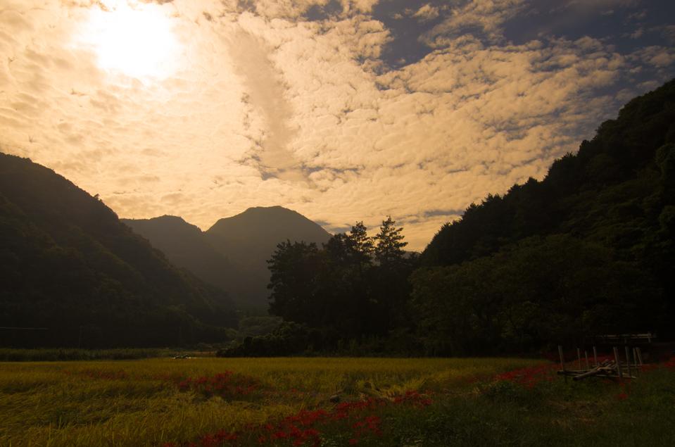 Photo 伊豆高原 池 夕景