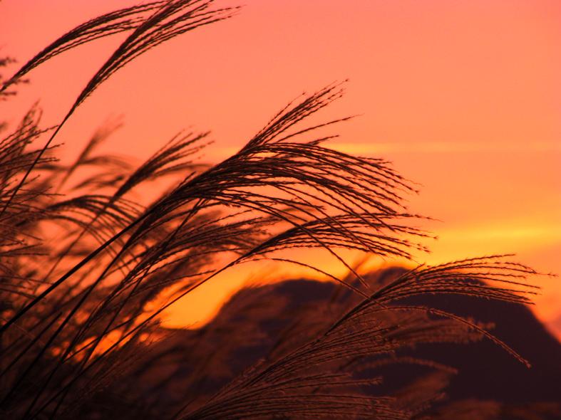 伊豆半島東伊豆の伊東市伊豆高原大室山の秋のすすき夕焼け
