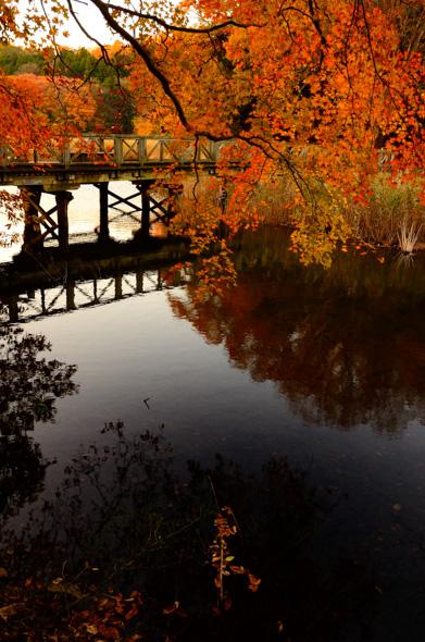 伊豆半島東伊豆の伊東市伊豆高原沼池の秋の紅葉