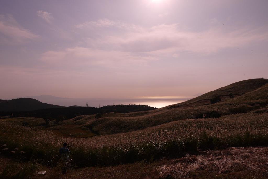 伊豆半島東伊豆町稲取の細野高原の秋のすすきイベントの写真