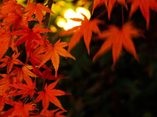 伊豆半島中伊豆の伊豆市修善寺温泉の紅葉ライトアップ