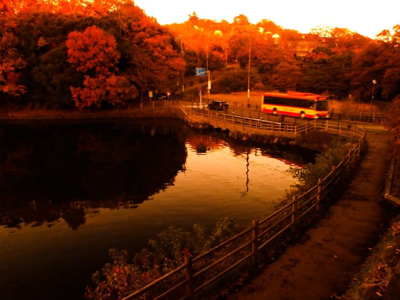 伊豆半島東伊豆の伊東市伊豆高原一碧湖の秋の紅葉