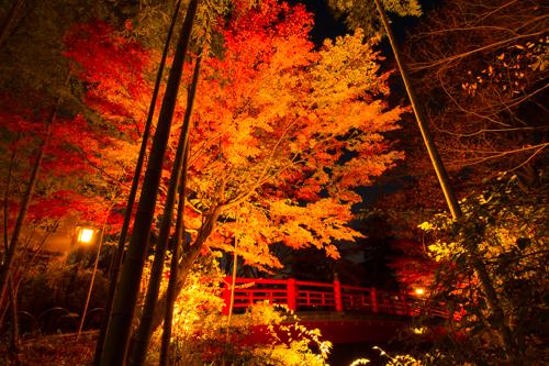 伊豆半島中伊豆の伊豆市修善寺温泉の紅葉ライトアップ全景