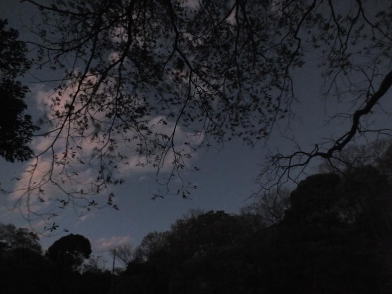 伊豆半島東伊豆の伊東市伊豆高原沼池の晩秋の風